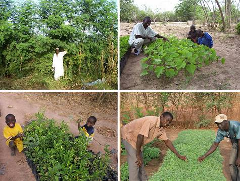 Tree planting in Senegal