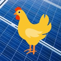 Chicken farms - solar panels