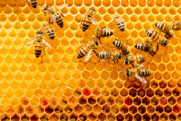Solar beekeeping