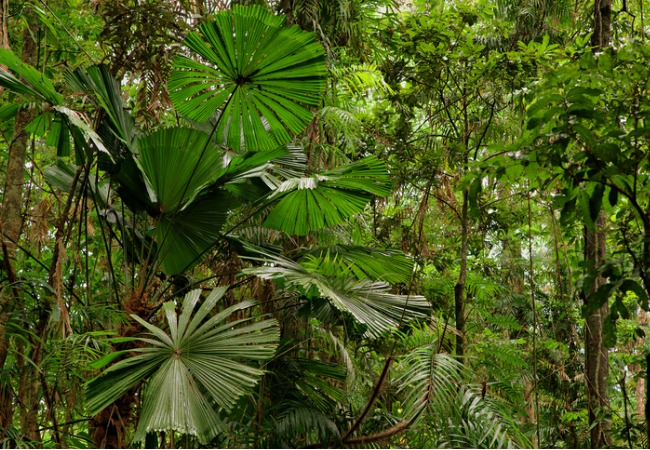 The Daintree Rainforest is an ancient ecosystem.
