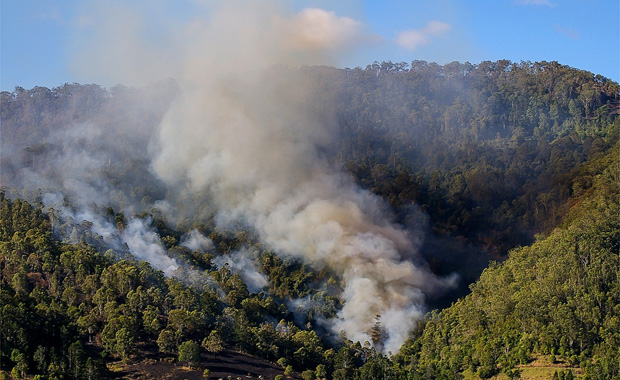 A firefighting expert says the government should address climate change bushfires link
